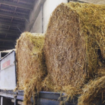 Using round bales for automatic distribution of straw