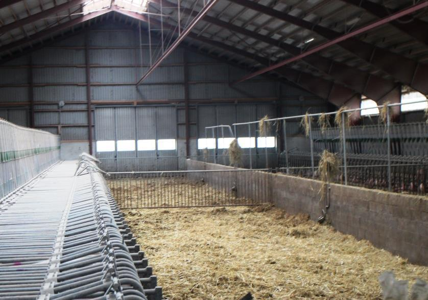 Reference Automatic Straw Distribution In A Pig Barn Jh